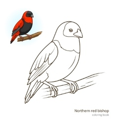 Northern red bishop color book vector