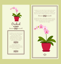 Orchid flower in pot banners vector