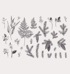 Set with winter plants vector