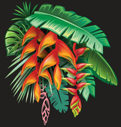 tropical plants and heliconia flowers vector image vector image