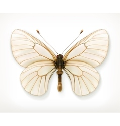 White butterfly icon vector image