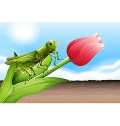 A grasshopper and the flower bud vector image