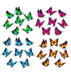 Collection of color butterflies vector