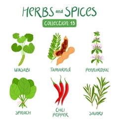 Herbs and spices collection 13 vector