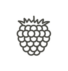 raspberry icon outline berry line fruit s vector image