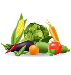 still life of vegetables vector image