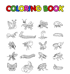 Coloring book with collection of insects vector