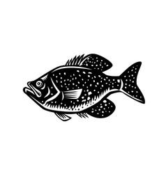 Crappie fish woodcut vector