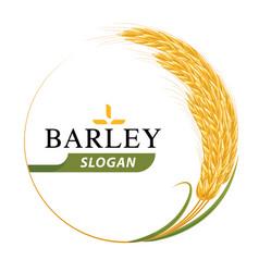 Organic barley product logo design template vector