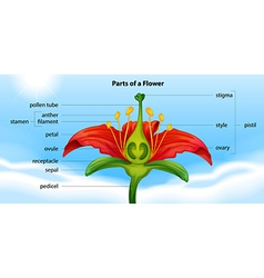 Parts of a flower vector image