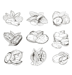 Engraved nuts isolated Set of mixed nuts vector image