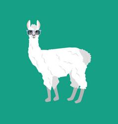 Llama in glasses vector