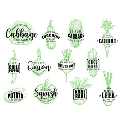 organic natural vegetables lettering vector image