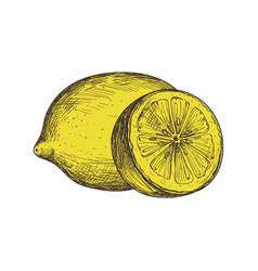 ripe lemon hand drawn isolated icon vector image