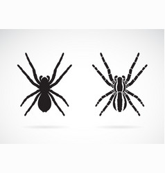 spider on white background insect animal easy vector image