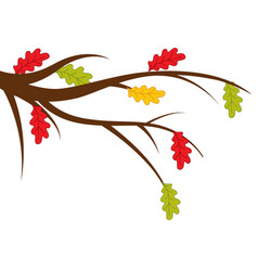branch with autumn oak leaves vector image