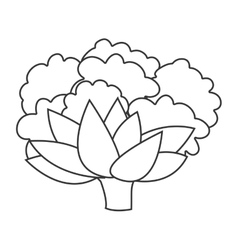 Cauliflower vegetable icon vector