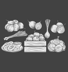 onion monochrome glyph icon set white on black vector image