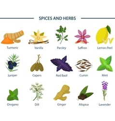 Set of icons of seasoning or spice on plates vector image