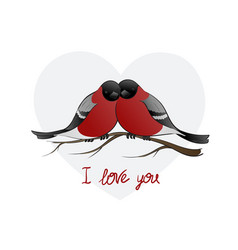 two bullfinch birds huddled vector image