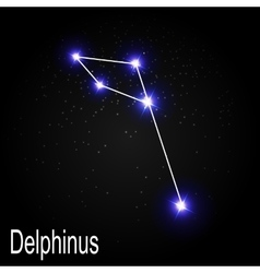 Delphinus Constellation with Beautiful Bright vector image vector image