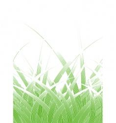 grass blades vector image vector image