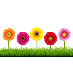 Gerbers and grass border vector