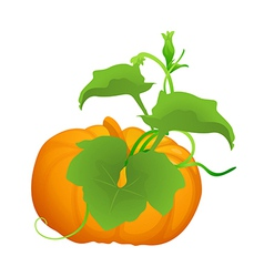 Icon pumpkin vector