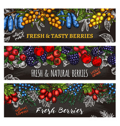 Sketch banners of farm and forest berries vector