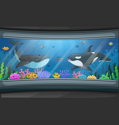 Whales swimming in aquarium tank vector