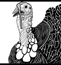 Turkey bird head as thanksgiving symbol vector image vector image
