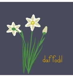 Daffodil plant iilustration vector