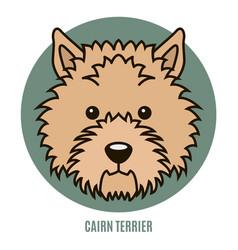 portrait cairn terrier vector image