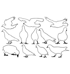 set of different pigeons vector image