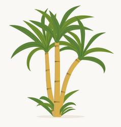 sugar cane cane plant sugarcane harvest stalk vector image