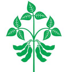 soybean plant vector image vector image