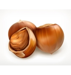 Hazelnuts in shell icon vector image