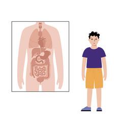 Internal organs in male body vector
