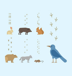 Animal footprints include mammals and birds foot vector