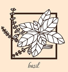 Hand drawn basil vector