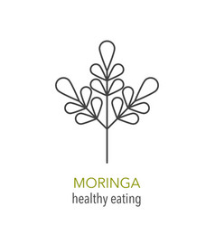 Moringa line icon vector