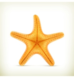 Starfish realistic icons vector image vector image