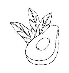 avocado half cut vector image