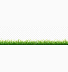 green grass border set on white background vector image