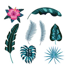 set natural flower and tropical leaves vector image