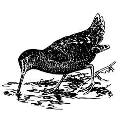 Bird eurasian woodcock vector