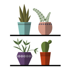 plants and cactus in pots set vector image