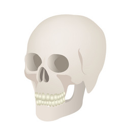 skeleton of the human skull icon vector image