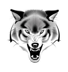 Snarling wolf dog husky head vector