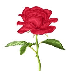 beautiful red rose with long stem and leaves vector image